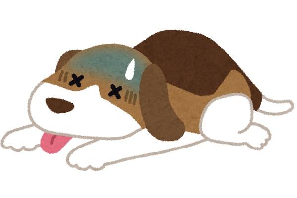 dog-sick