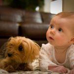 妊娠中に犬も赤ちゃん返り!症状は嫉妬やきもち、赤ちゃんを噛む?