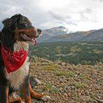 犬連れ登山を散歩感覚ですると迷惑!高尾山や神社でのマナーを紹介