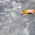 犬は日向ぼっこがなぜ好きか?理由と日光浴の必要性と効果について