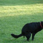 犬の下痢が止まらない!原因不明で元気ない時はご飯が理由?