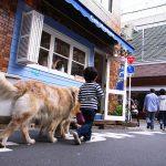犬は散歩しないとダメ!適切な時間や距離や回数とは?