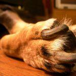 伸びすぎは危険!犬の爪切りの頻度や長さ、小麦粉での止血を紹介!