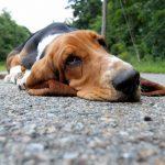 犬の夏バテの症状は食欲不振や嘔吐!