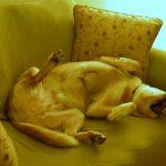 犬の睡眠時間について!よく寝る犬は健康そのもの!