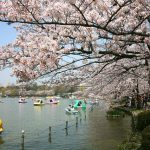 代々木公園と上野公園の犬連れお花見スポットをご紹介