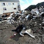 地震などの災害時の犬との同行避難の重要性と便利な防災グッズ