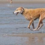 犬との海水浴は危険?生理や下痢などの注意点と便利な持ち物!