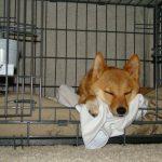 一人暮らしを始める場合に犬を実家に置いていく是非について
