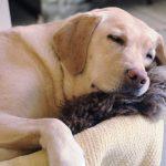 犬のいびきがうるさい理由は寒さ?病気なら心臓病に要注意!