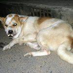 犬のてんかんの症状や原因、寿命について!前兆や後遺症はあるの?