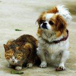 【小型犬】室内犬で初心者に飼いやすい犬ランキング