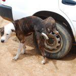 犬のトイレトレーニングのやり方はサークルを使う方法が失敗しない