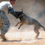 犬が飼い主を本気で噛む理由はストレス?効果的なしつけ方法を紹介