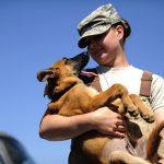 犬が散歩で歩かない時のしつけ方法!抱っこはわがままになる?