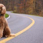 【中型犬・大型犬編】飼いやすい犬ランキング