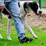 愛犬が散歩で動かない?リーダーウォークのやり方やしつけ方法!