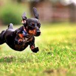 雑種犬の寿命が長いって本当?大型犬と小型犬でも大違い!