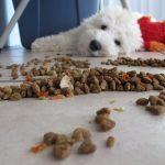 犬がご飯を隠す理由は保存して残すため!