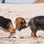 犬がしっぽを噛む・追いかけるのをやめさせる方法