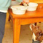 犬のご飯の回数に目安はあるのか?量や時間の理想とは?