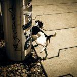 犬のトイレの1日の適切な回数とは?おしっことうんちの頻度を紹介