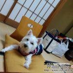 河津の峰温泉へ旅行に行きました!