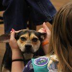 犬の耳掃除の頻度!綿棒やアルコール洗浄液は使ってはダメ