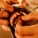 犬の虫歯の症状は穴空き、痛み、腫れ!治療費はいくら?