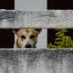 一人暮らしで犬を飼うとしつけが大変で育犬ノイローゼになるかも