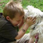 犬が飼い主の手足や顔をなめる理由や意味とは