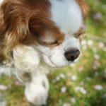 犬の生まれ変わりについて体験談を集めてみました
